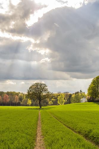Wiesen-Weg