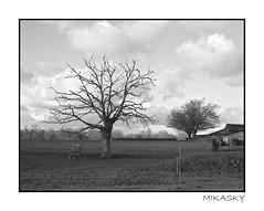 arbre_cheval