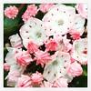 Streissguth Gardens. Heavenly. :cherry_blossom: