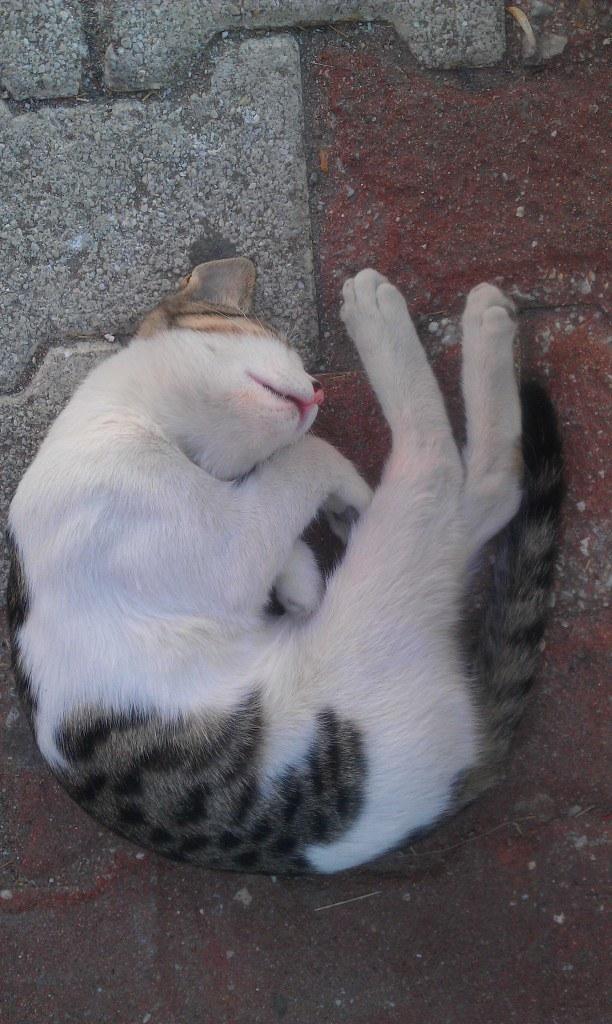 睡到不知形象的貓