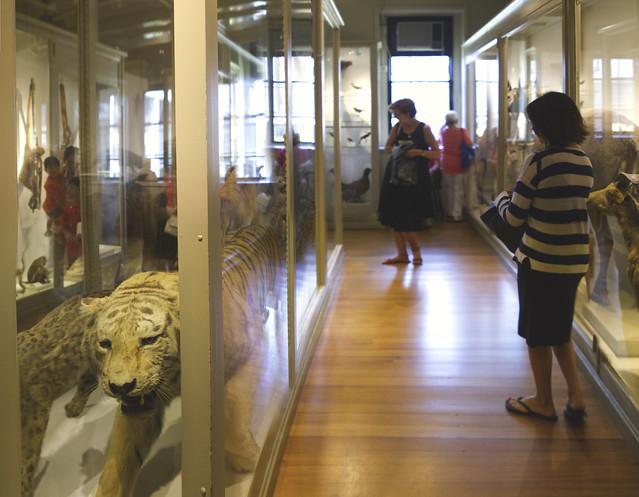 Maite and Tiger at Harvard Natural History Museum, Cambridge (2016)