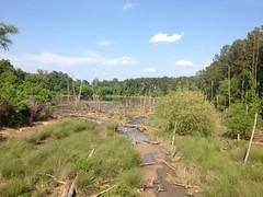 Beaver Pond on Noonday Creek