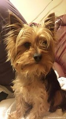 Mon, May 4th, 2015 Lost Male Dog - The Local Area, Lucan, Dublin