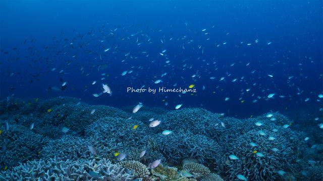 熱帯魚いっぱいw