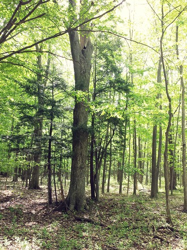 Forest, Knox Farm State Park, East Aurora