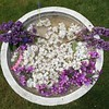 Arrangement by my grand nephew and grand niece - #lilacs in a #birdbath