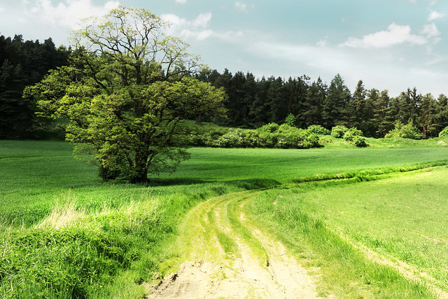 IMG_6018 Rural idyll No.3 - country Hoštice