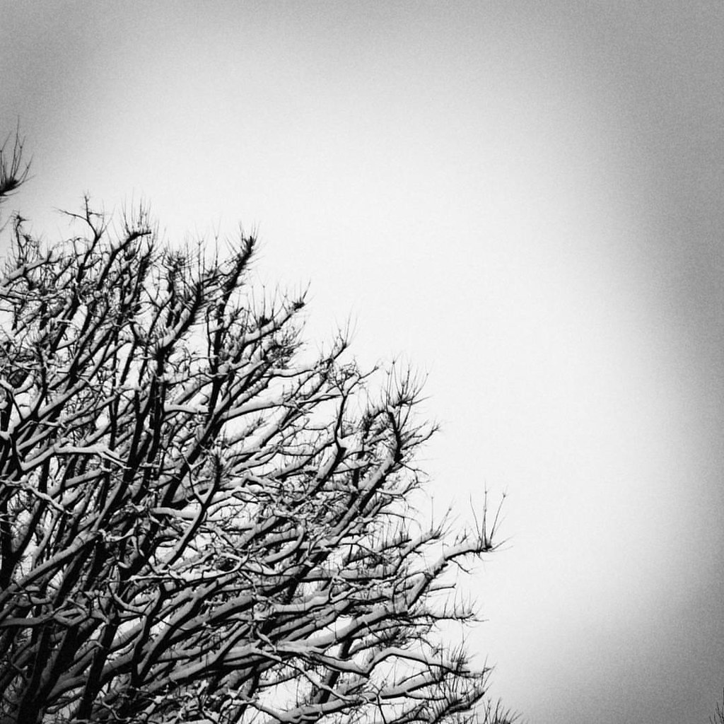 Tree and snow  #blackandwhite #bw #snow #winter #Milano #minimal #minimalism #nature #tree #grey #highcontrast #lines #love #photooftheday #amazing #instalike #igers #picoftheday #instadaily #instafollow #followme #instagood #bestoftheday #instacool #inst
