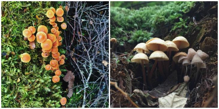 ramble_fungi