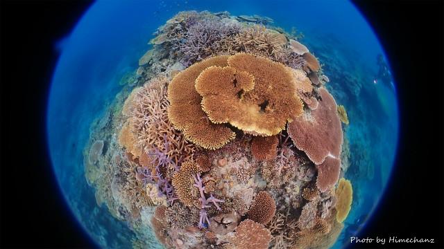 極上サンゴたち