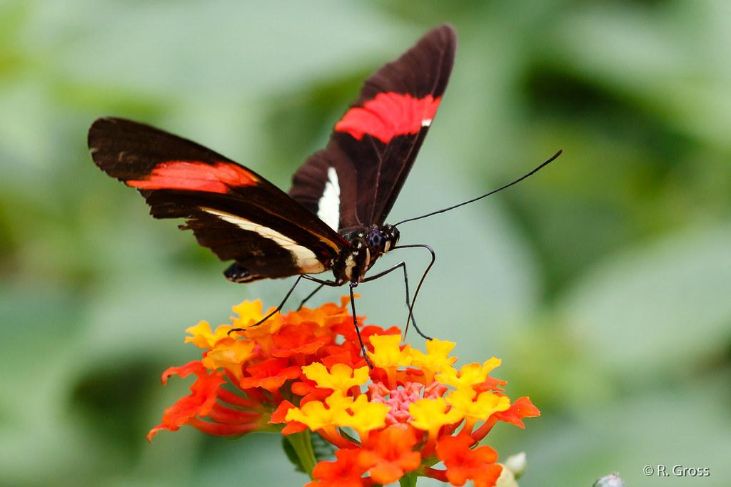 Schmetterling 69