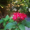 #flowers #florida #garden #backyard