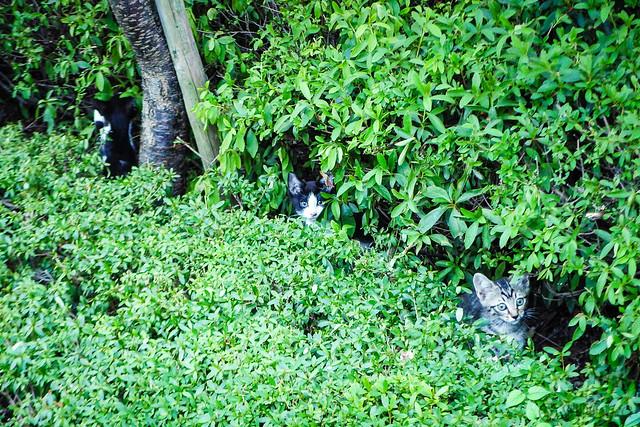 Today's Cat@2016-08-08