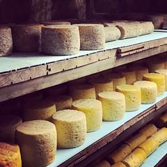 Fromage fermier au lait cru de La Fage #Lozère #fromage #lafage #grandrieu