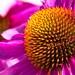 Wildflower Pollen