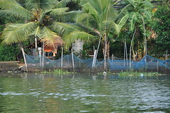 A private fish farm on the backwaters