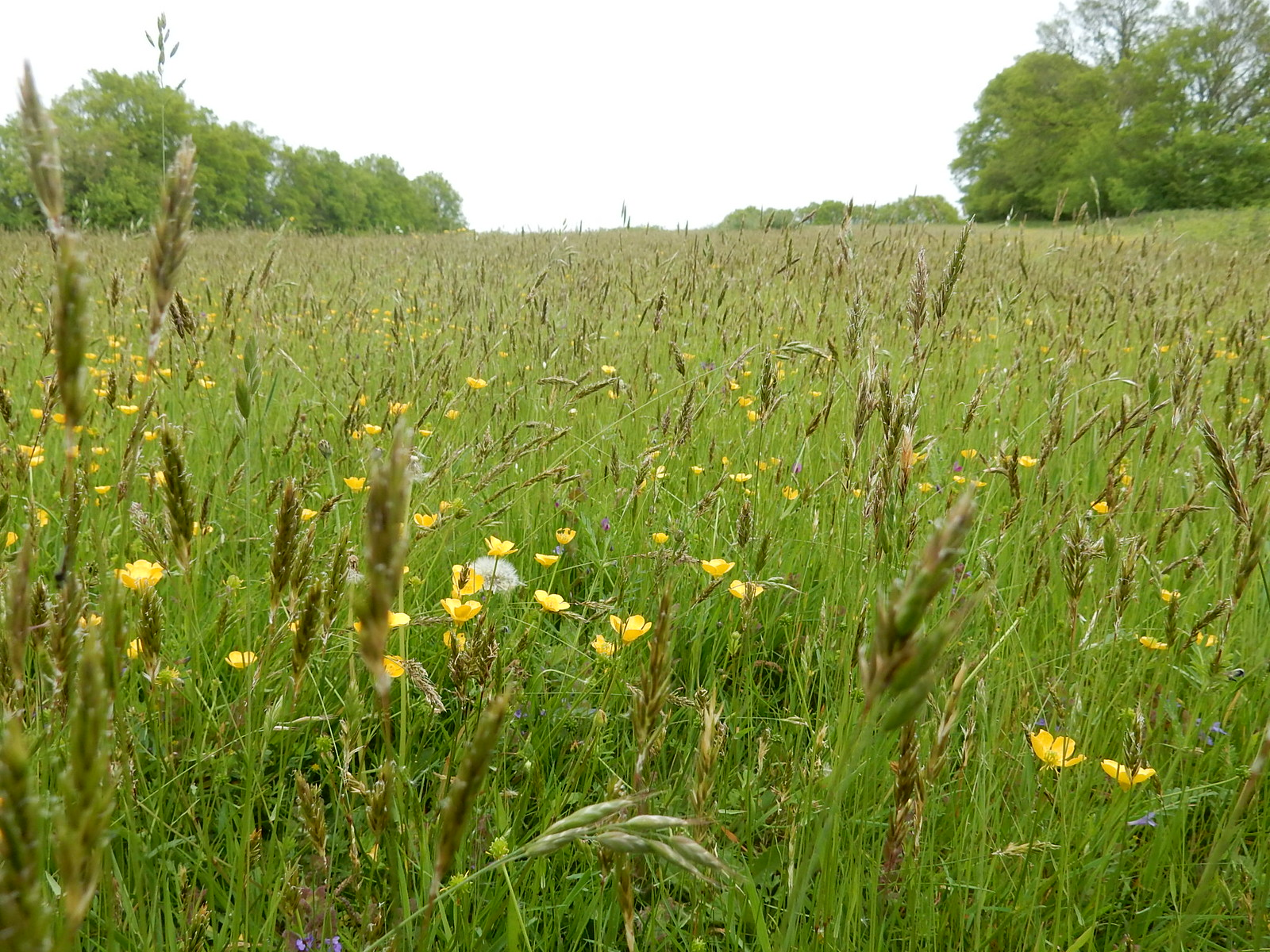 Meadow Bures to Sudbury
