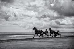 trap racing practice, UTAH Beach Normandy