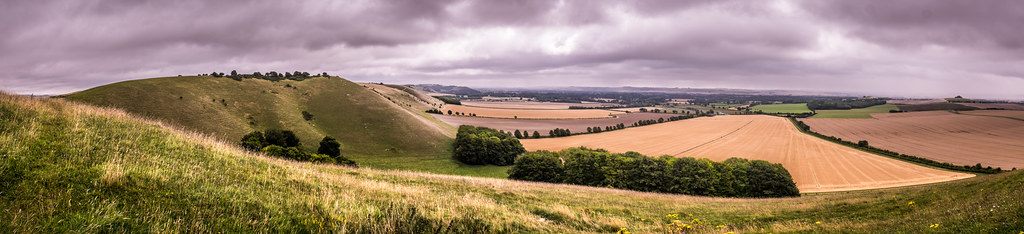 Pewsey Downs, Wiltshire, England picture