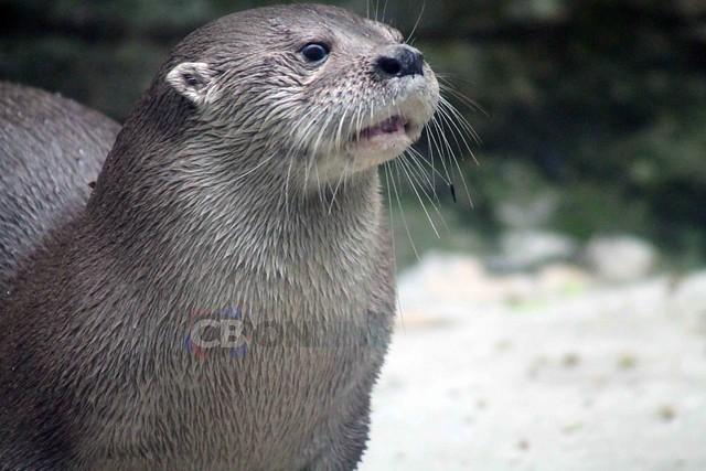 Zoológico de Cali visita obligada