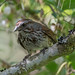 song sparrow come to visit by SteveA07