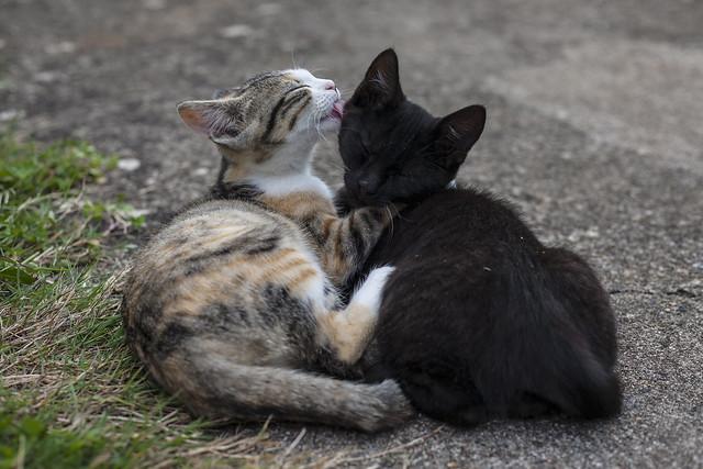 Petits chats câlins (9042b)