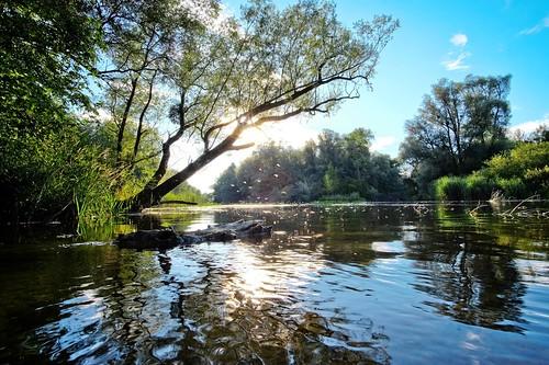 donau aulandschaft riverside riverlandscape landscape landschaft river danube au ausee wetlands