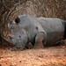 Sleepy rhino by crafty1tutu (Ann)