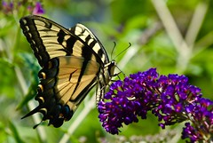 Colors of beautiful Butterfly!